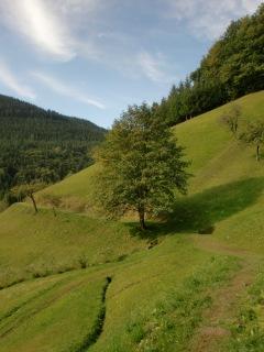 Schwarzwald 21