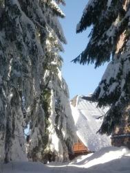 Schwarzwald 12