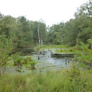 Lueneburger Heide 4