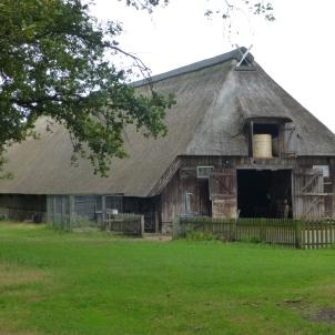Lueneburger Heide 7
