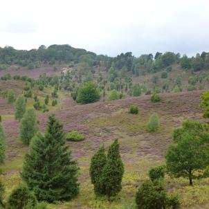Lueneburger Heide 8